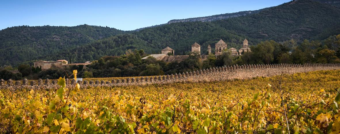 http://www.marcasrenombradas.com/wp-content/uploads/2011/07/TORRES_GransMuralles_Vineyard.jpg