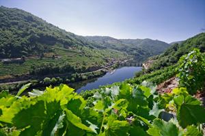 Vinigalicia obtiene el indicador 'Ardán de Empresa Global 2017'